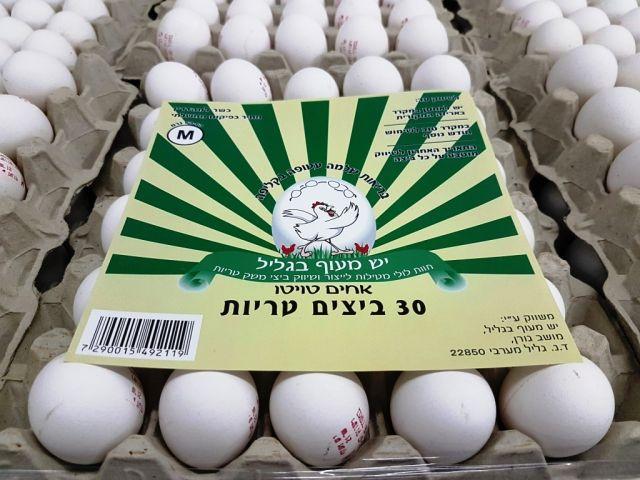 תבנית ביצים M - למזמינים מעל 80 תבניות בלבד!